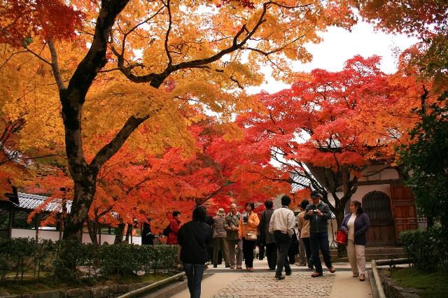 秋の旅行の参考に♪紅葉の季節 ...