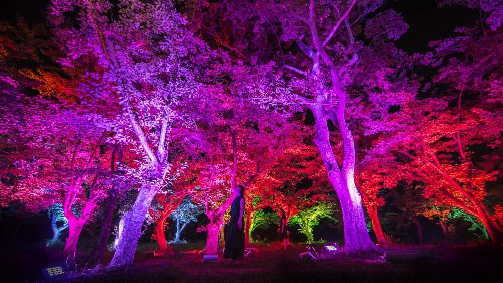 ときわ公園作品「呼応する森と彫刻」詳細