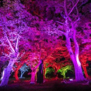 「チームラボ 宇部市ときわ公園 2017 呼応する森と彫刻」が7月より開催!