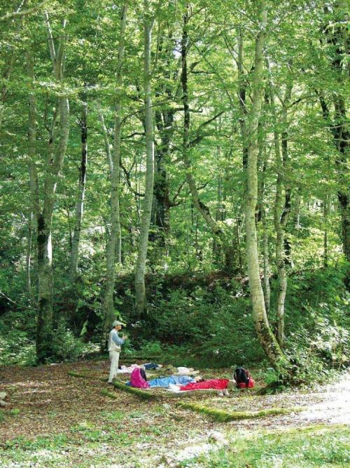 癒しの森を歩く「ブナ原生林(温身平)セラピーウォーキング」