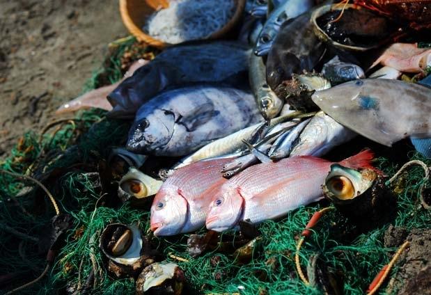 厳選した魚介を味わえる日本料理