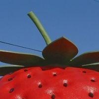 インスタで人気!長崎の国道で見つけた巨大フルーツの正体は!?