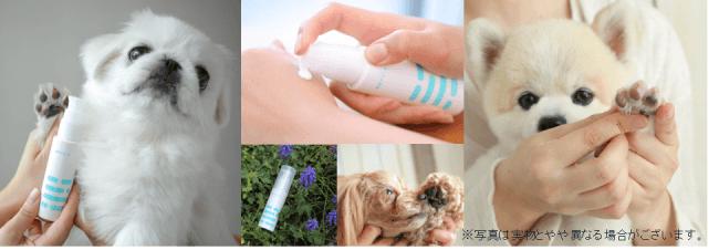 獣医師・気象予報士が開発した「犬の熱中症週間予報」と獣医師監修のもと開発した「ドックドッグ 肉球クリーム」