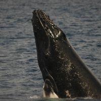 クジラもお待ちかね!今季の旅は奄美大島「ネイティブシー奄美」に行こう