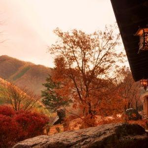 【全国】11月がピーク!見頃の紅葉が楽しめる宿