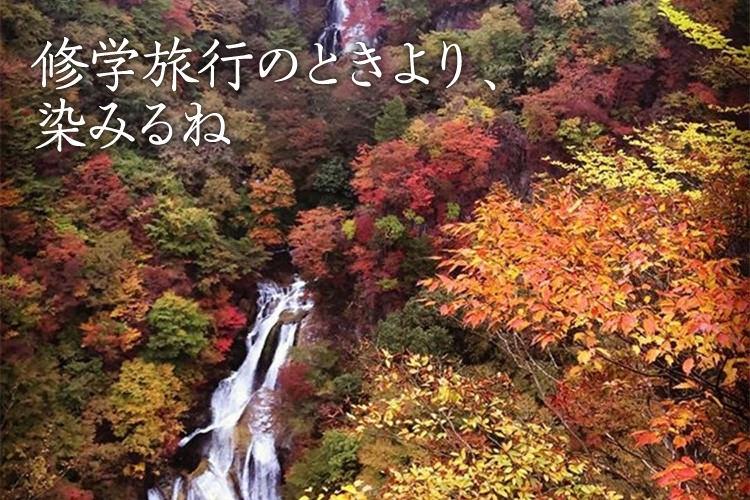 湖や滝、紅葉を愛でる「紅葉狩り&観光も楽しむ 日光東照宮へ親子2人旅」@日光(栃木県)