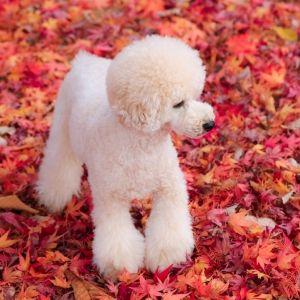 【旅色コンシェルジュが提案】秋~冬の絶景をギュッと凝縮! 自然を愛でる旅4選その0