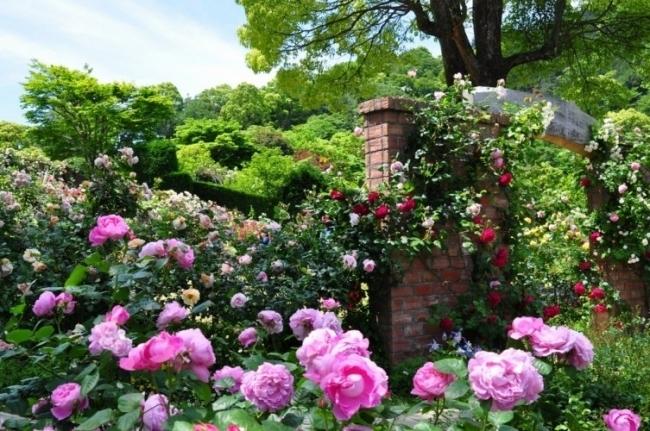 美しいバラ&ハーブに癒され、絶景カフェでひと休み