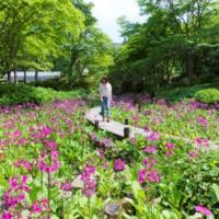 本格アスレチックにイルミネーション……春の神戸・六甲山へ