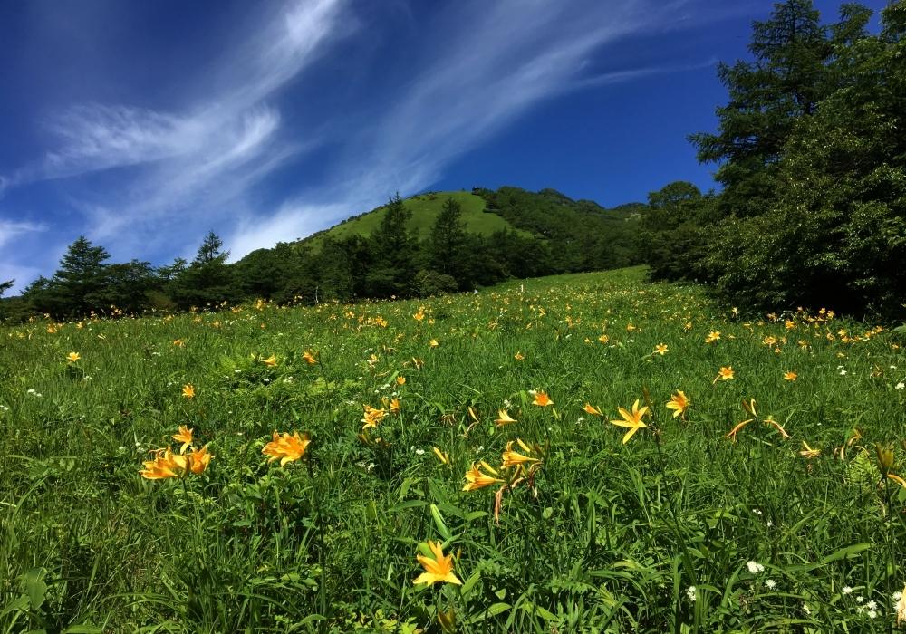 2日目:「日光市霧降高原キスゲ平園地」で秋の草花に出会う