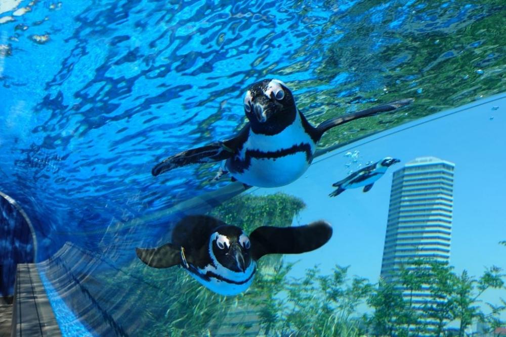 ①高層ビルならでは! 天空のペンギン「サンシャイン水族館」(東京都)