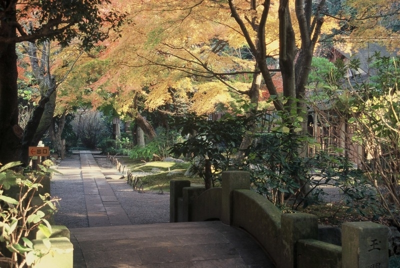 【6】あじさいだけじゃない! 四季折々の自然が美しい「明月院」/神奈川県・鎌倉市