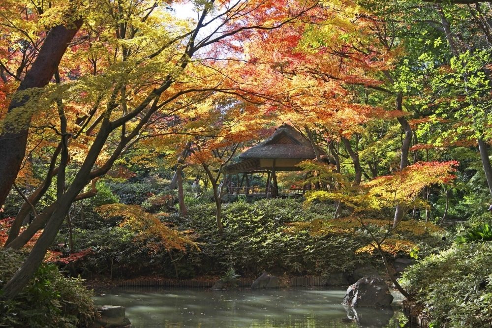 【関東】紅葉シーズンに行きたい! 旅気分が味わえる庭園10選 その2