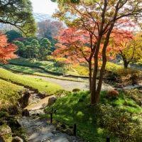 【関東】紅葉シーズンに行きたい! 旅気分が味わえる庭園10選