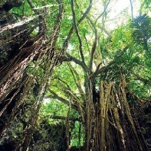 神秘的な体験ができる。沖縄県にある「ガンガラーの谷」観光ガイド