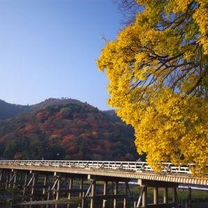 京都を楽しみ尽くす旅をする。嵐山で訪れたいおすすめスポット