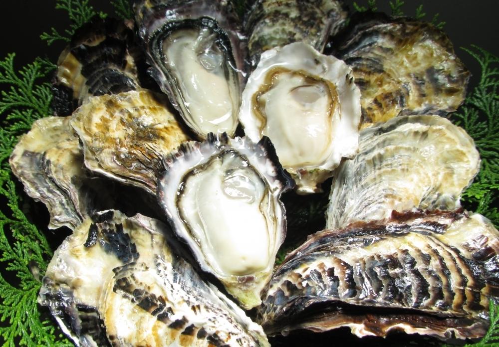 漁師直送! 岡山・虫明海域産の牡蠣