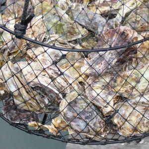 ひと口食べれば違いがわかる! 注文が殺到する岡山「牡蠣漁師 福吉丸」の牡蠣