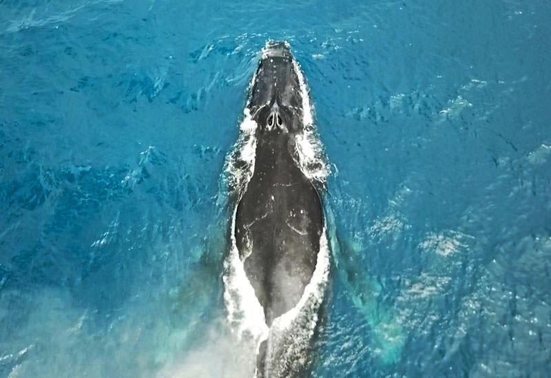 どれだけ巨大かってそれはもう! ザトウクジラのサイズ感と、冗談みたいな食事