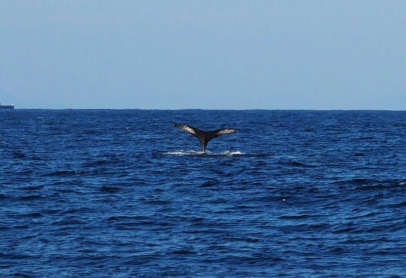 クジラと泳ぐ!? まさか日本で!? 一生のお宝経験「ホエールスイム」を徳之島でどうぞ【連載第49回】その4