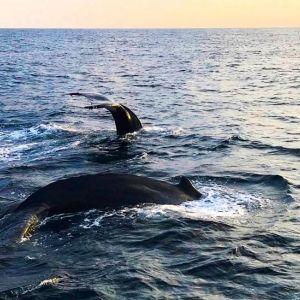 クジラと泳ぐ!? まさか日本で!? 一生のお宝経験「ホエールスイム」を徳之島でどうぞ【連載第49回】
