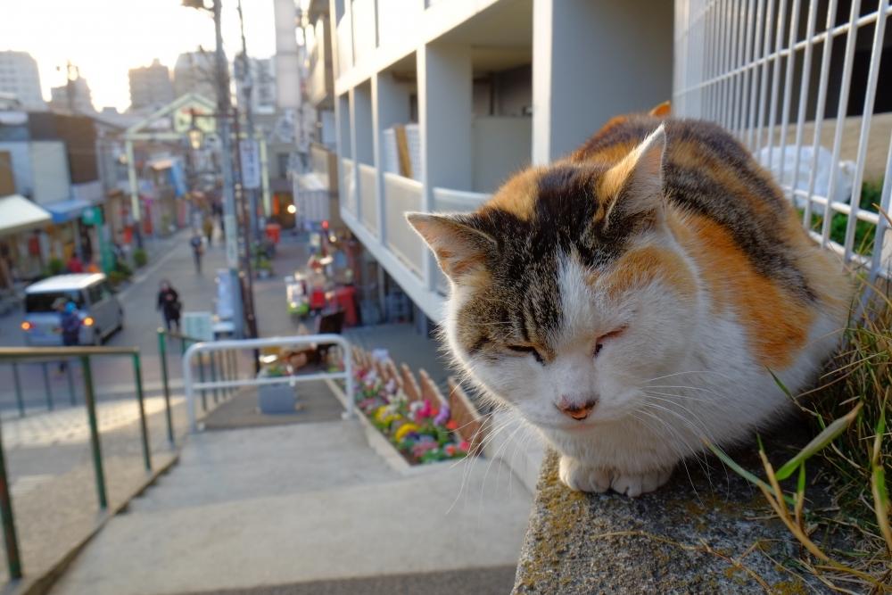東京の日常の魅力を再発見!わざわざ行きたい商店街10  その3