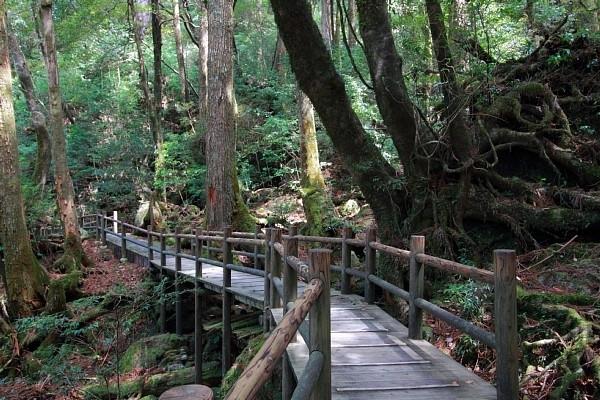 2017年旅行トレンド「エコツアー」って?③おすすめのスポット:屋久島