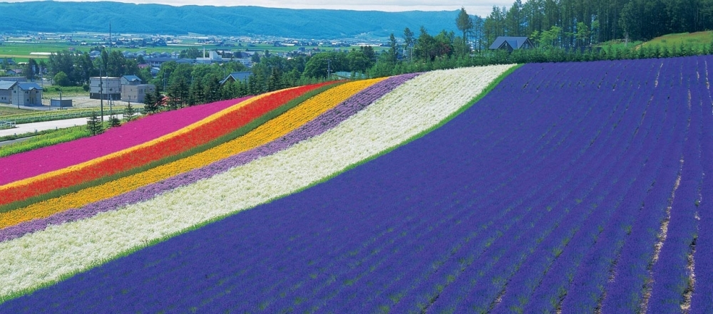 北海道の夏を満喫!富良野の「ファーム富田」へ②歴史が作る絶景のラベンダー畑