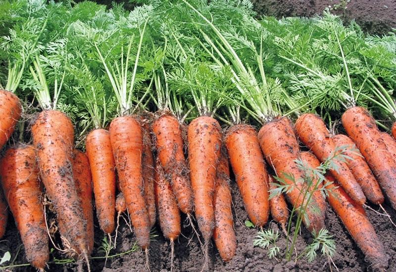 徳島生まれの新鮮野菜が華やぐ和風ピクルス