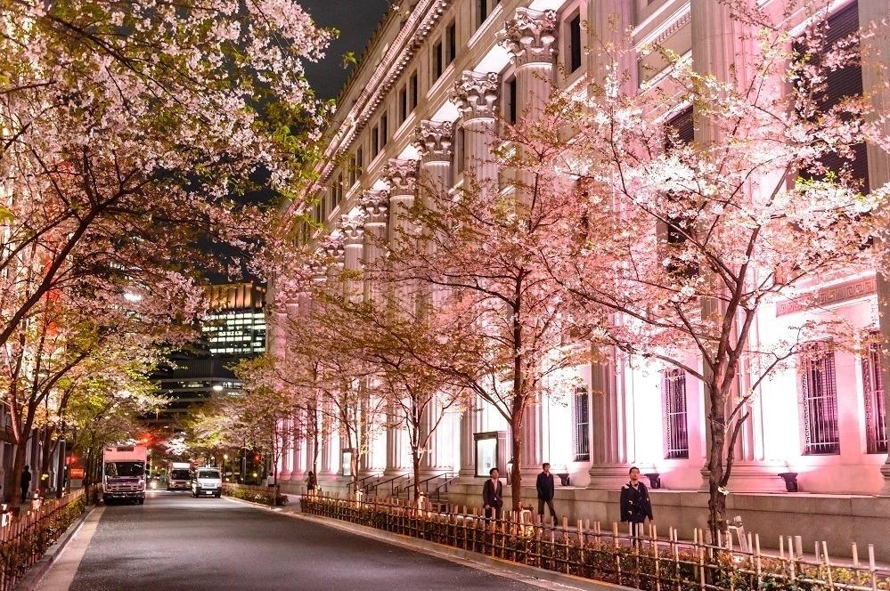 日本橋、八重洲、京橋で桜を満喫