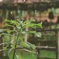 雨の日のお出かけが楽しくなるアイテム[連載]旅色☆大使の◯◯チェック♪vol.22