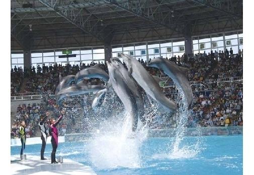 水族館のイルカショーは一見の価値あり!