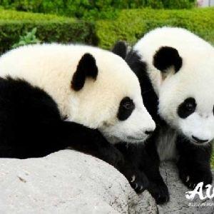 パンダ好きにはたまらない。和歌山県「アドベンチャーワールド」の魅力