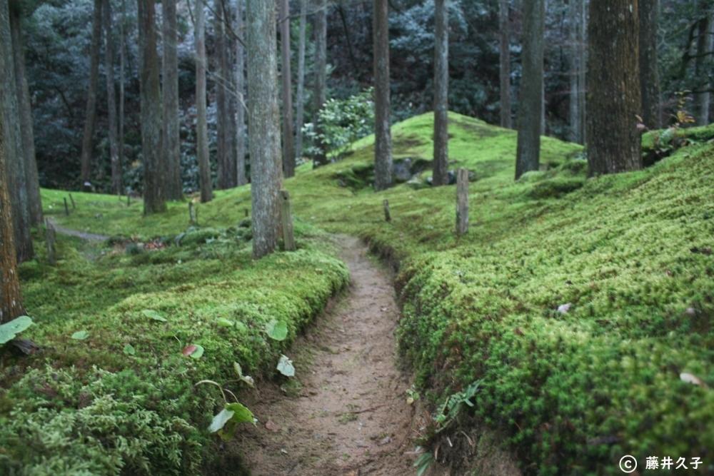 苔の里の魅力②さまざまなコケの表情が楽しい