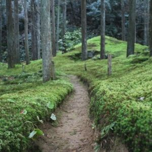 コケ愛好家・藤井久子さんに聞く!石川県小松市にある「苔の里」ってどんなところ?
