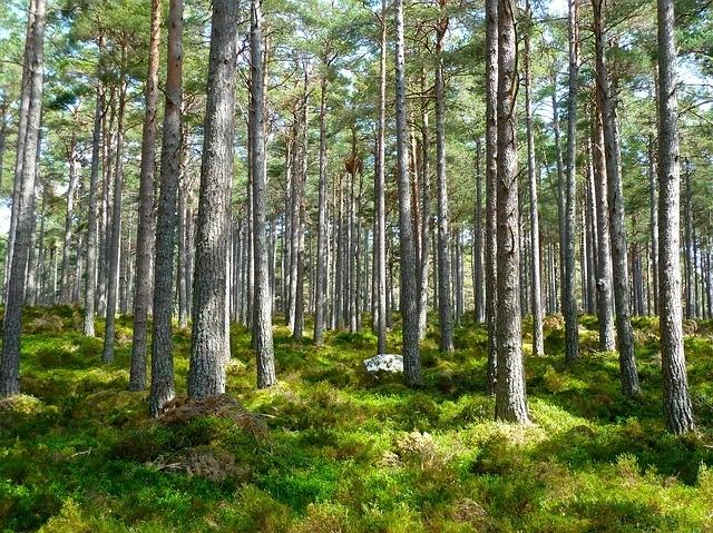①森林セラピー