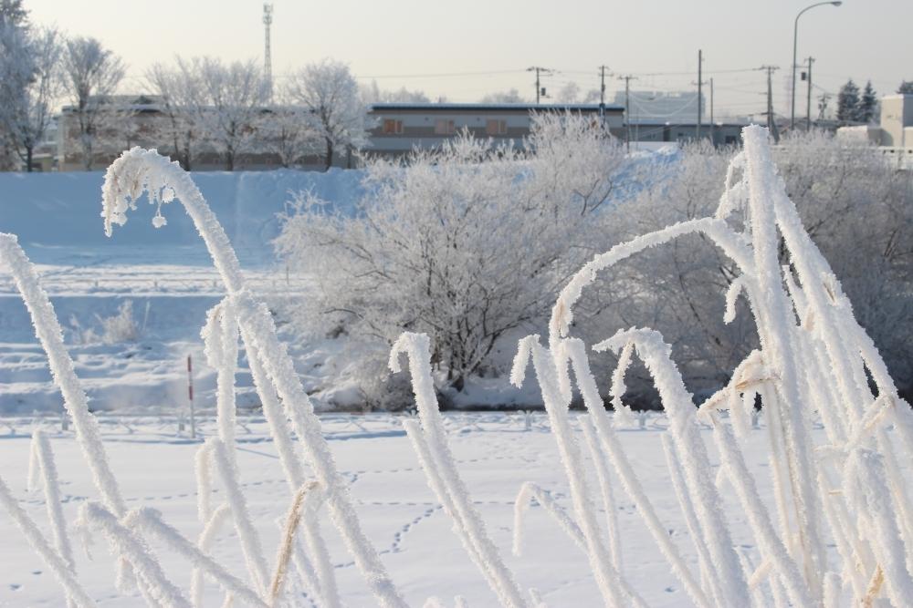 冬の十勝は魅力がいっぱい!