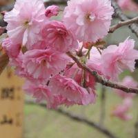 北国に春がやってくる。北海道の「桜の名所」4選