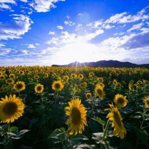 夏は香川旅へ! 今年行くべきスポット「瀬戸内」の魅力