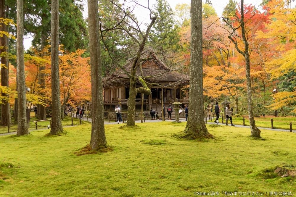 苔庭の緑とモミジの赤のコントラストが美しい「大原三千院」