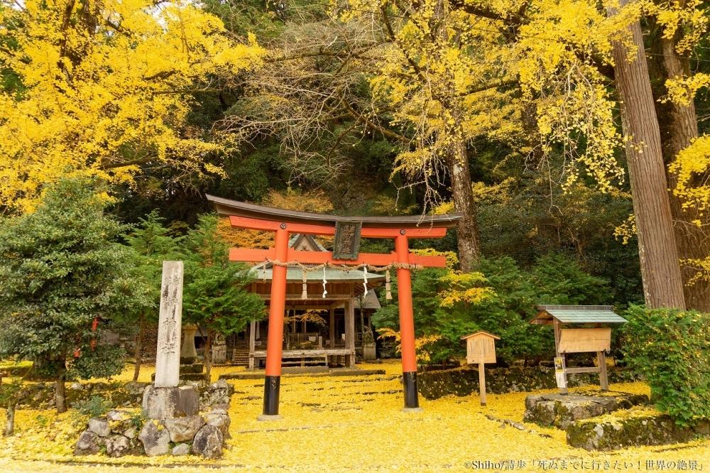 一面のイチョウの絨毯を堪能。「岩戸落葉(いわとおちば)神社」