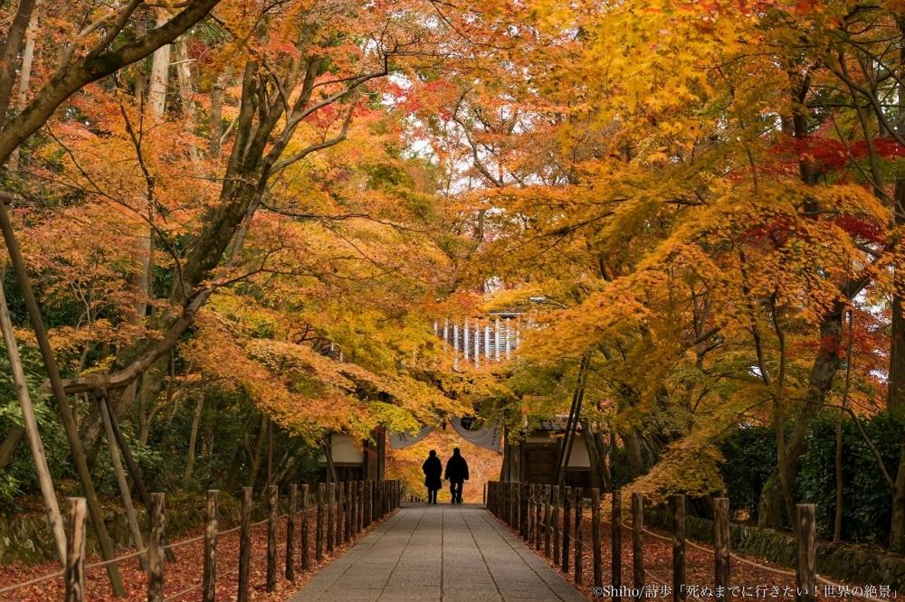 京都で秋の終わりを告げるのは「光明寺」の紅葉