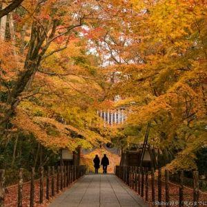 【京都】「死ぬまでに行きたい!世界の絶景」プロデューサー・詩歩さんオススメ、秋の穴場絶景5選