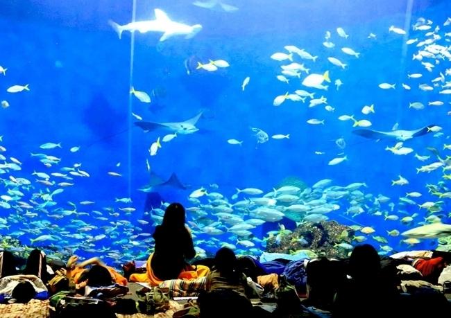 落ち着いた雰囲気の中で水族館を満喫