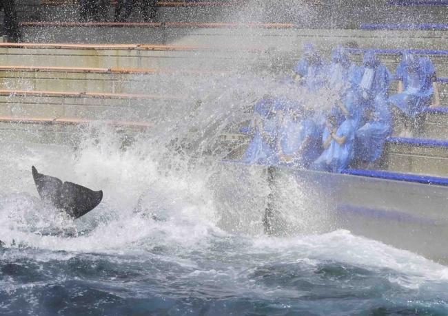 シャチの水かけなど海の動物たちと触れ合いも