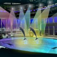 今年の冬は大切な人と水族館で癒しの時間を過ごしましょう!