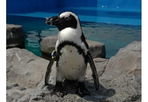 「ペンギン」に会える関東でおすすめのスポット▶日本最大級の水族館「横浜・八景島シーパラダイス」