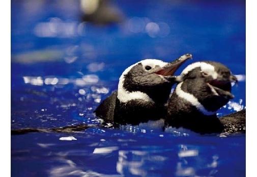 「ペンギン」に会える関東でおすすめのスポット▶屋内最大級のペンギンプール「すみだ水族館」
