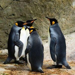 「ペンギンに会いたい!」思い立ったらすぐ行ける関東のスポット4選