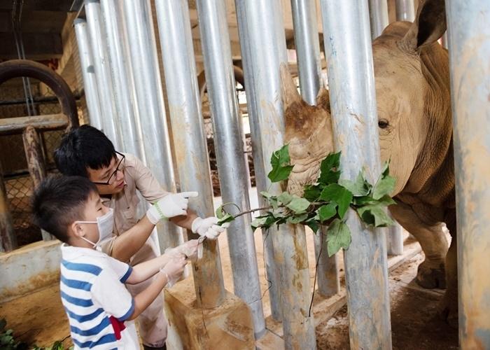 世界で2番目に大きい哺乳類、シロサイの飼育に挑戦!